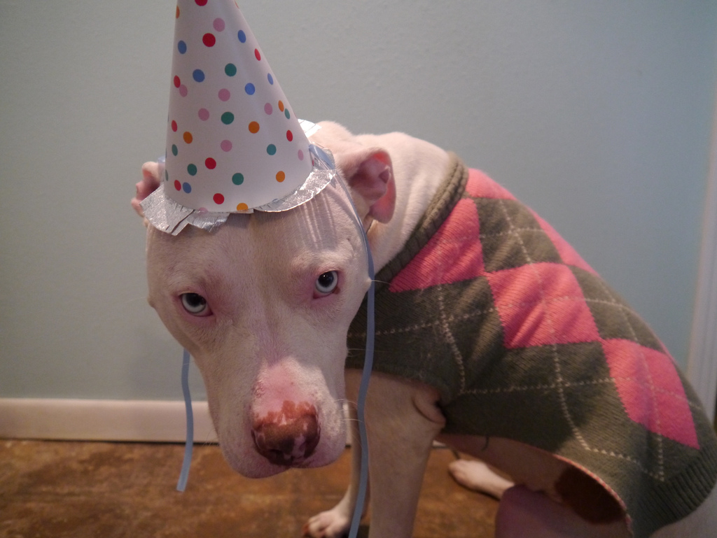 Iris in her party hat